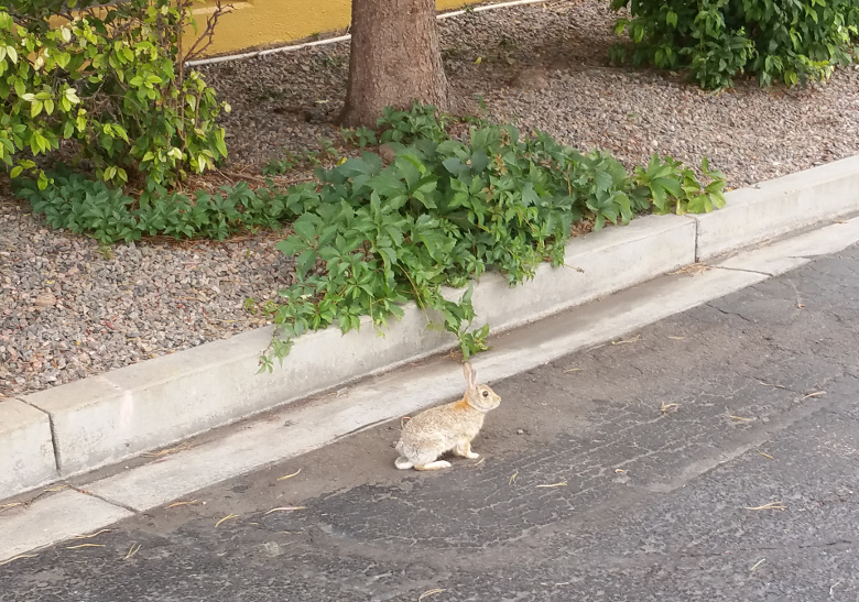 Rabbit crossing our hike